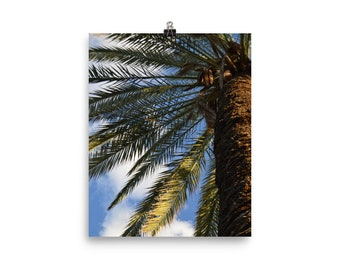 Palm Tree Up Close Poster
