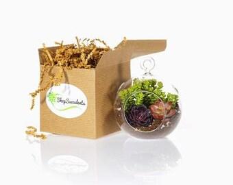 Mini Succulent Terrarium - terrarium kits, hanging terrarium, glass terrarium, hanging plants, hanging planter, succulent gifts