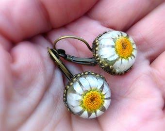 Real daisy earrings Mini terrarium flower earrings /Pressed flower jewelry /Botanical jewellery /Holiday gift for her
