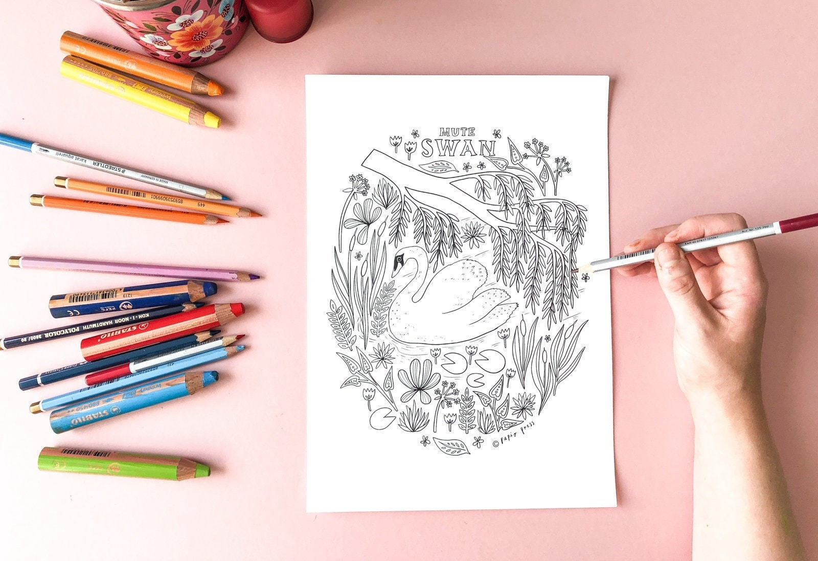 Free Swan Coloring Pages | 1097x1600