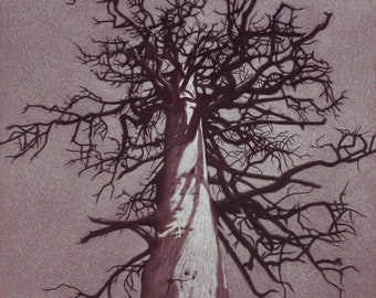 Dead Tree charcoal pencil drawing by Rita Foster 'Twisted'