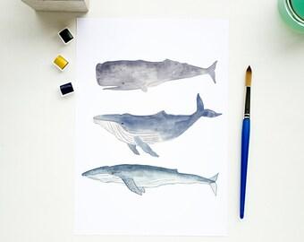 Watercolour print - Whale print