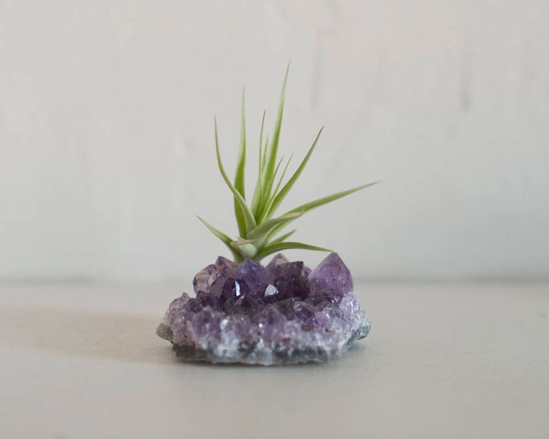 Air Plant On Crystal Amethyst Crystal Terrarium Crystal Air Etsy