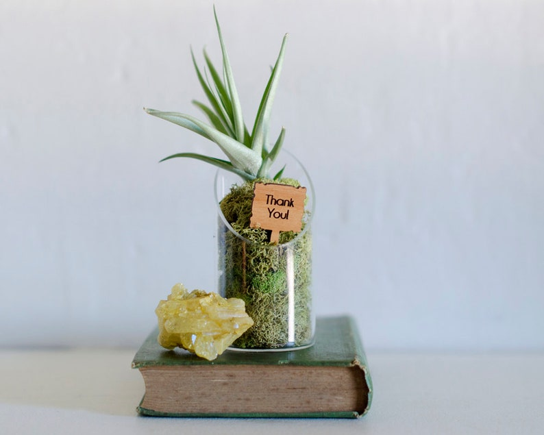 Thank You Gift Air Plant Terrarium Employee Appreciation Etsy