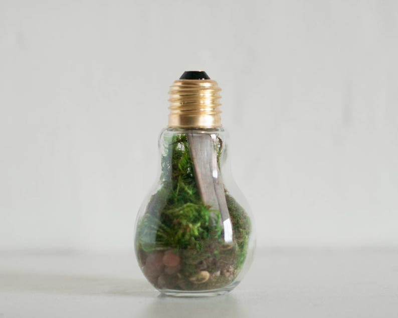 Lightbulb Terrarium Terrarium Decor Diy Terrarium Kit Moss Etsy