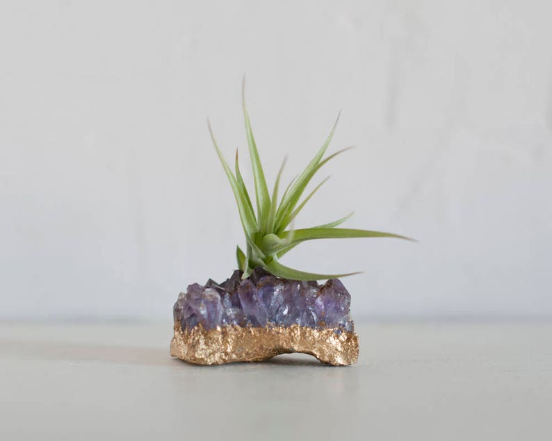 Amethyst Airplant Holder Gold Dipped Air Plant Terrarium Etsy