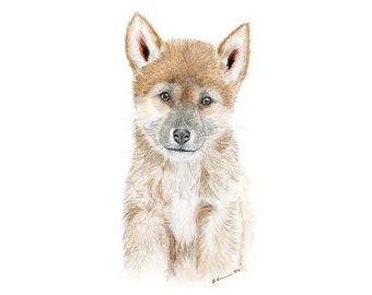 baby dingo etsy