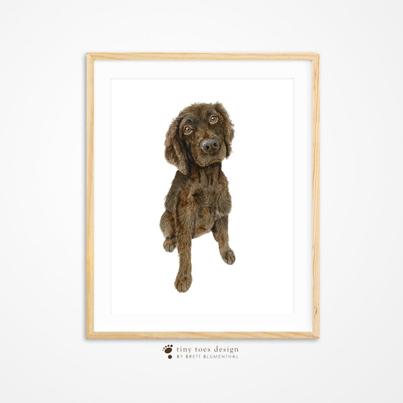 Carolina Hunting Boykin South Spaniel Etsy Pup Dog Portrait