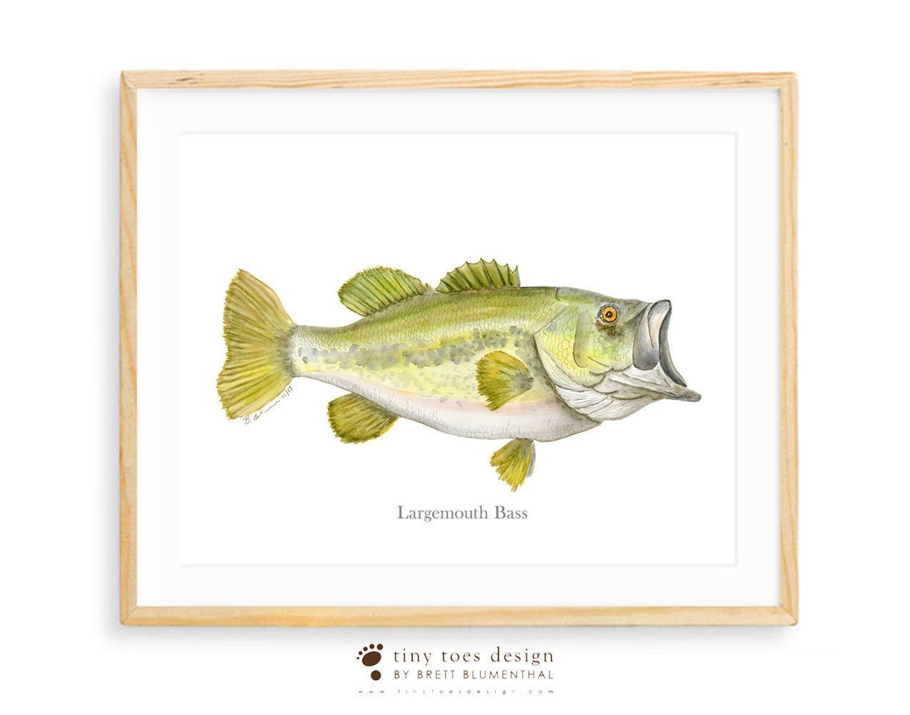 Forellenbarsch Aquarell Fisch-Kunst-Druck Geschenke für | Etsy