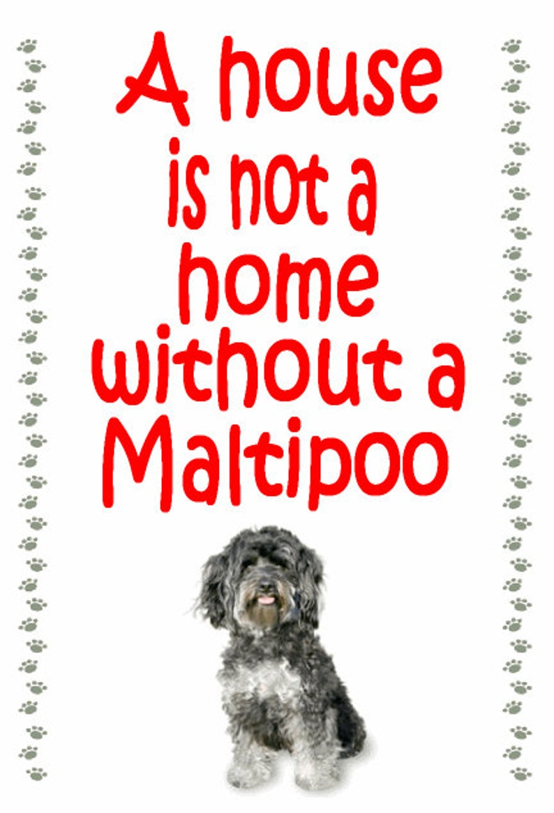 Maltipoo Fridge magnet Gifts for dog owners various designs available