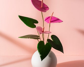 Pink Anthurium, paper flower, round, geometric, floral arrangement, art photography, windowlight (Unframed)