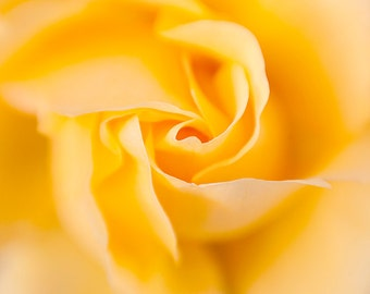 Yellow Rose Photograph -  Home Decor - Flower Photography - Fine Art For Your Home - Floral Photography