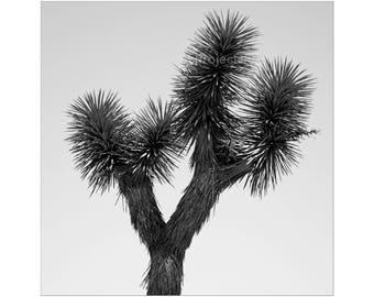 Joshua Tree B&W Photo - Black and White Photo,Desert Home Decor, California Desert, Palm Springs, California, Coachella, Desert Landscape