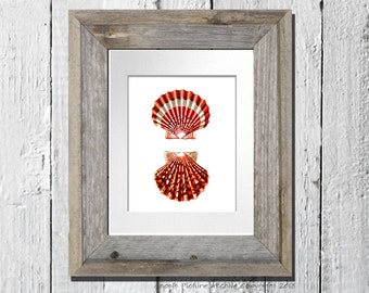 Beach theme Decor Sea Shell Print no.9 Red Scallop sea shell Coastal art bathroom decor Nautical themed wall art decor 8x10 wall hanging