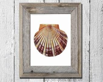 Coastal Decor Sea Shell Print no.2 Scallop shell sea life Beach cottage bathroom decor Nautical themed wall art decor 8x10 wall hanging