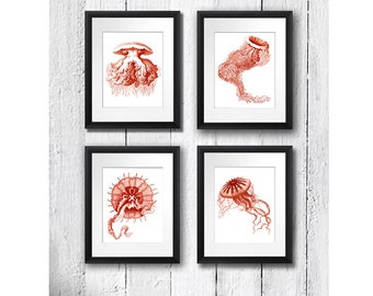 Jellyfish Jelly Fish  Prints set of 4, Sea life art,  beach decor ,Ocean art nautical Decor, Bathroom Decor