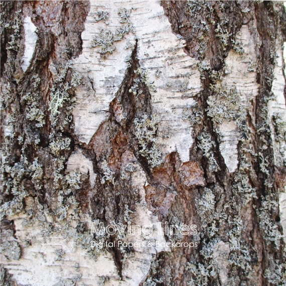 birch bark backdrop tree bark background digital printable