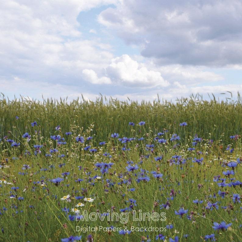 Outdoor Wedding Photo Shoot Backdrop Blog Header Summer Photo Photography Back Drop Blue Flowers Landscape Cornflowers