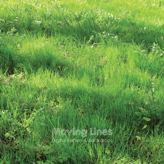 photo regarding Printable Grass known as Spring Gr Image Backdrop, Eco-friendly Wallpaper, Lush Hay Backdrop, Merchandise Pictures Record, Outside the house Printable Electronic Report