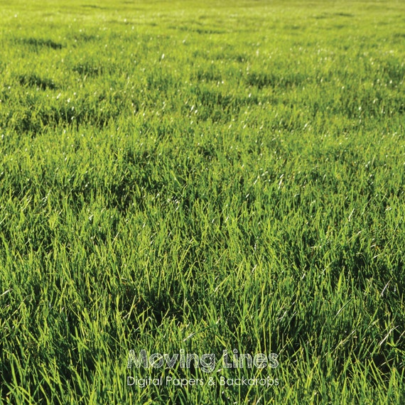 Green Grass Backdrop Digital Wallpaper Lush Grass Baby Photography Background Back Drop Digital Outdoors Photo Shoot Prop