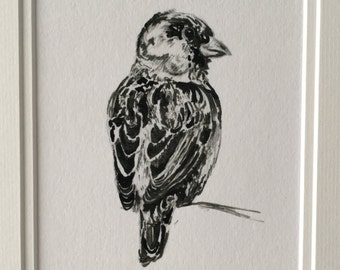 Sparrow Illustration // print in black ink