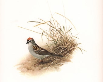 JF Lansdowne Print Book Plate Art, Chipping Sparrow
