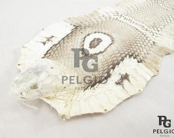 "PELGIO Genuine Sea Snake Skin Leather Hide Pelt 5/"" x 90 cm Beige Free Shipping"