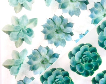 Edible Wafer Succulents--3 sheets