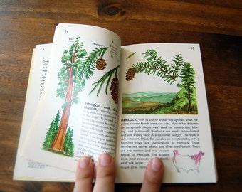 Vintage Book: Trees - 1956