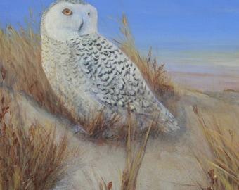 Owl Snowy