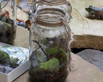 terrarium kit diy