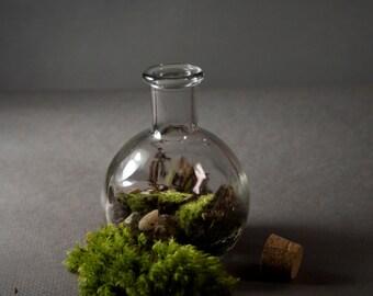 Mini Bottle moss terrarium