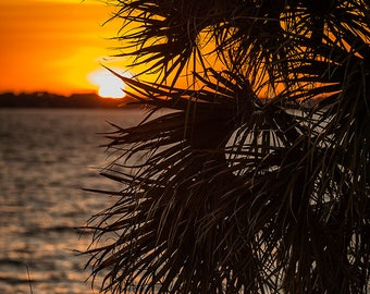 Art Print: Florida Palm Tree, Indian Harbour Beach area, Indian River, Florida, Tropical Trail, Merritt Island Florida, Banana River Drive