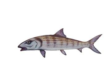 Acrylic Bone fish 14 inch mount