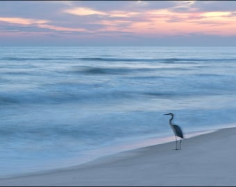 Beach Photography, heron photograph, Great Blue Heron, Perdido Key, beach, sunset, National Seashore,