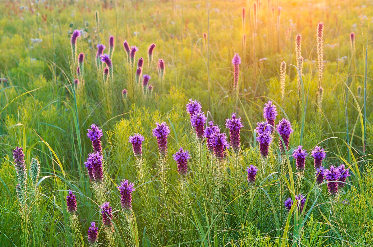 Nature Photography Prairie Flowers Floral Wildflowers Etsy