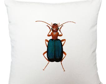 Cushions/ cushion cover/ scatter cushions/ throw cushions/ white cushion/ blue beetle cushion cover