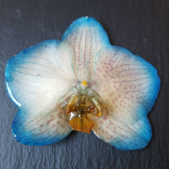 Real Orchid Flower Necklace Phalenopsis in blue and cream