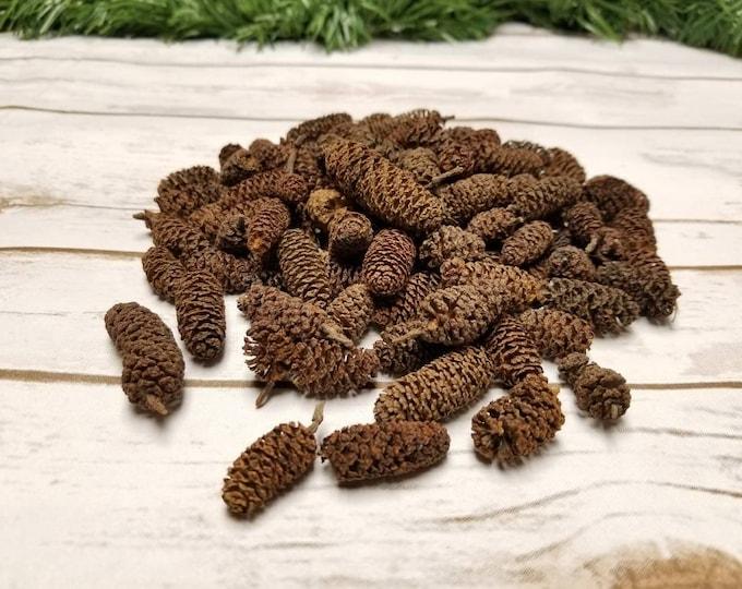 4 Oz Birch cones for crafting, decoration, potpourri, sachets, pinecones