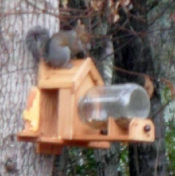 Cedar Squirrel Feeder with optional dual corn holder (includes gallon glass jar)