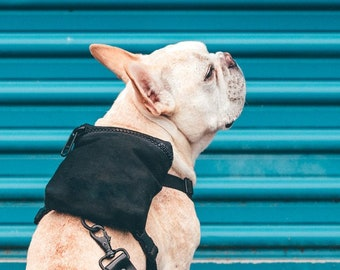 Frenchie harness | Etsy