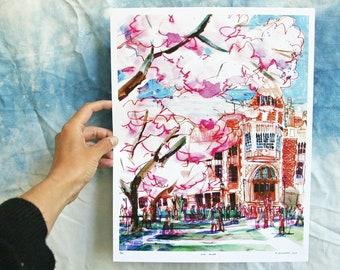 "UNIVERSITY OF WASHINGTON | Cherry Blossoms on the U Dub Quad, Seattle | Watercolor Illustration | Digital Print | 11x14"" or 10"" x 13"""