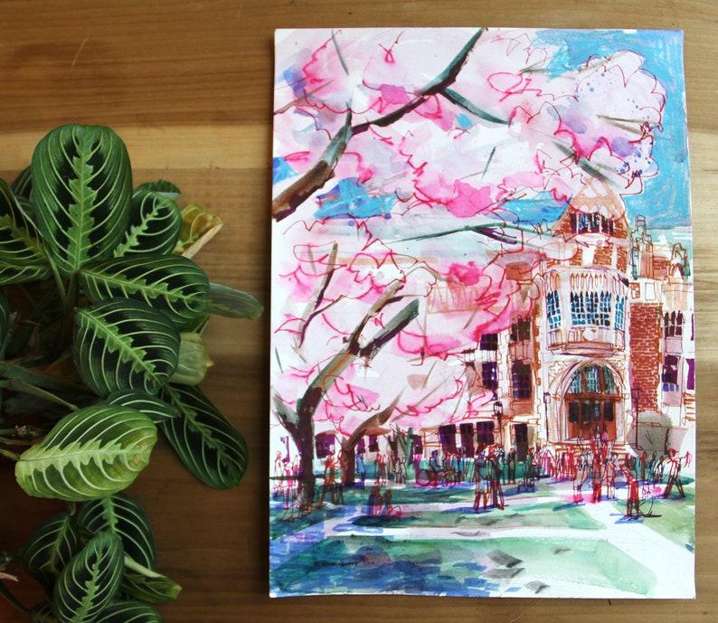 Cherry Blossoms  University of Washington Hanabi  Seattle image 0