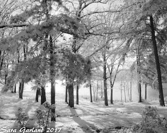 Black and White Photography, Nature Photography, Landscape, Winter, Snow, Fog, Wall Art, Home Decor, Print, Outdoors, Arkansas, Forest
