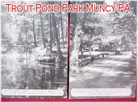 Trout Pond Park Muncy PA 2 Postcards - Hughesville - Picnic Grove Fishing  Ponds - Near Williamsport Pennsylvania Milton - FREE SHIPPING