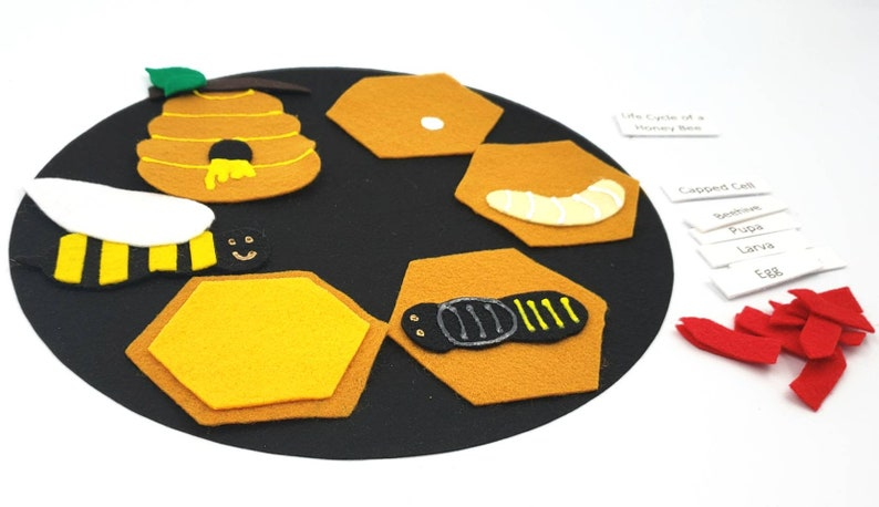 honey bee felt set Honey Bee Life Cycle life cycle felt board homeschool biology preschool science Felt Board Set montessori