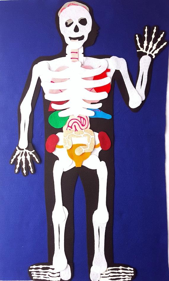 Anatomy Felt Set