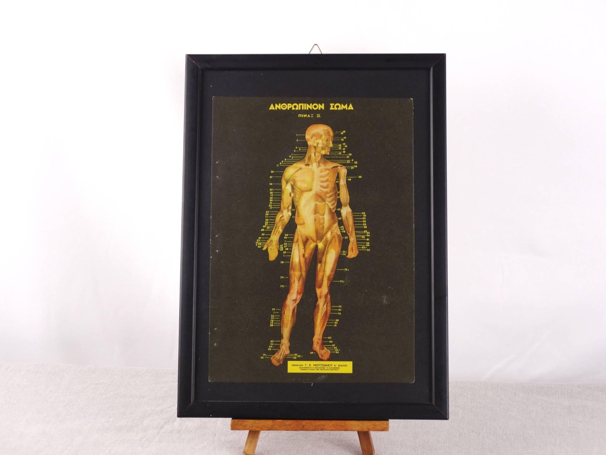 Human Anatomy Poster Medical Poster Human Biology Print Etsy
