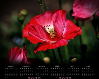 Red Poppies • 2022 Poster Calendar • Yearly Calendar • Year at a Glance • Choose from 4 Sizes: 12x12, 14x14, 15x15, 16x16