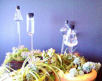 Watering Globes made from Genuine Chemistry Glassware: Small Erlenmeyer